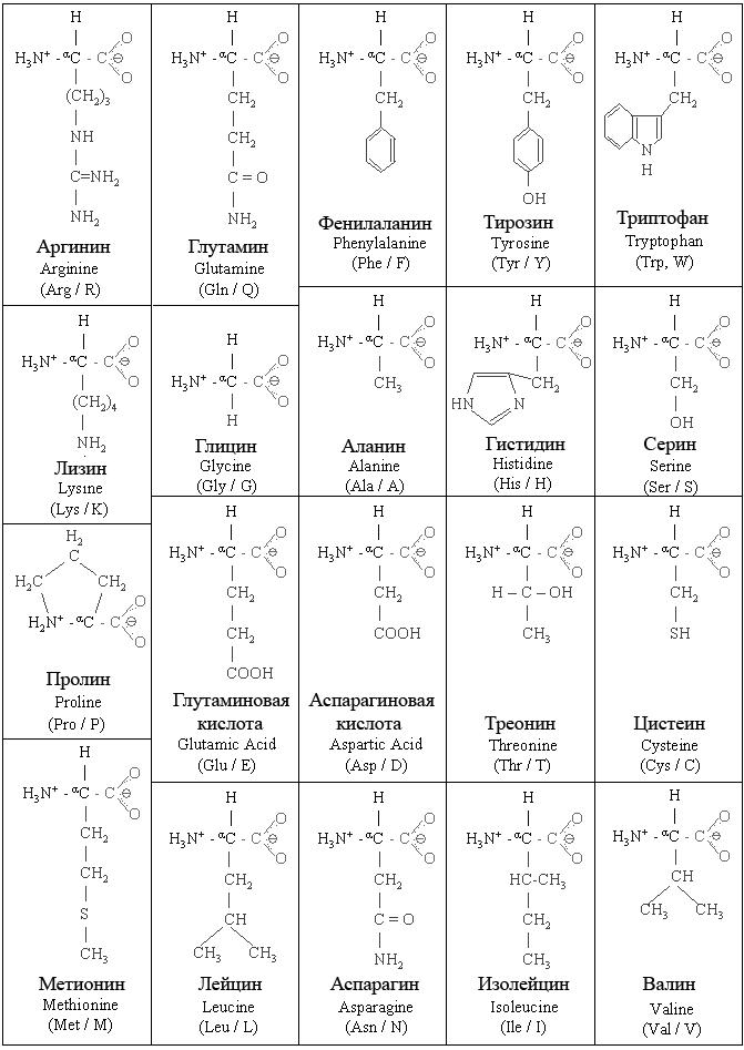 http://kodomo.fbb.msu.ru/FBB/year_09/term1/aminoacids.jpg