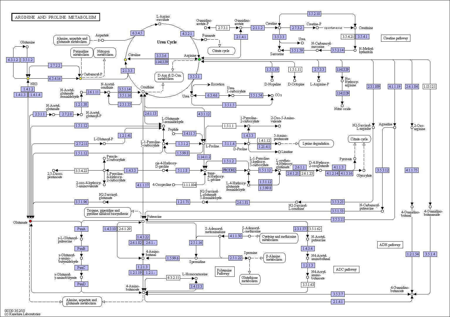 документацию картинки метаболические пути д николсона экспозиции