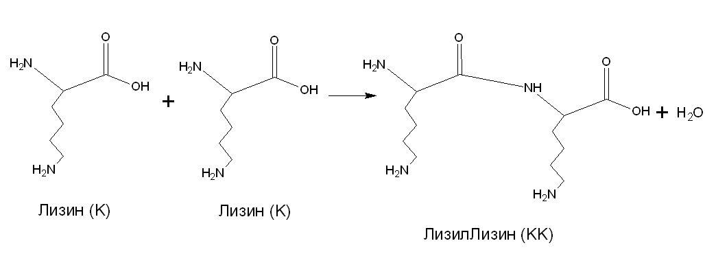 3)Схема образования дипептида