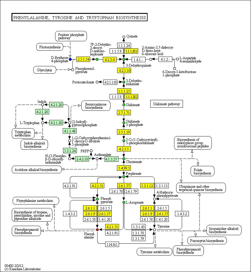 Ниже приведена картинка, на которой выделены желтым ферменты, которые