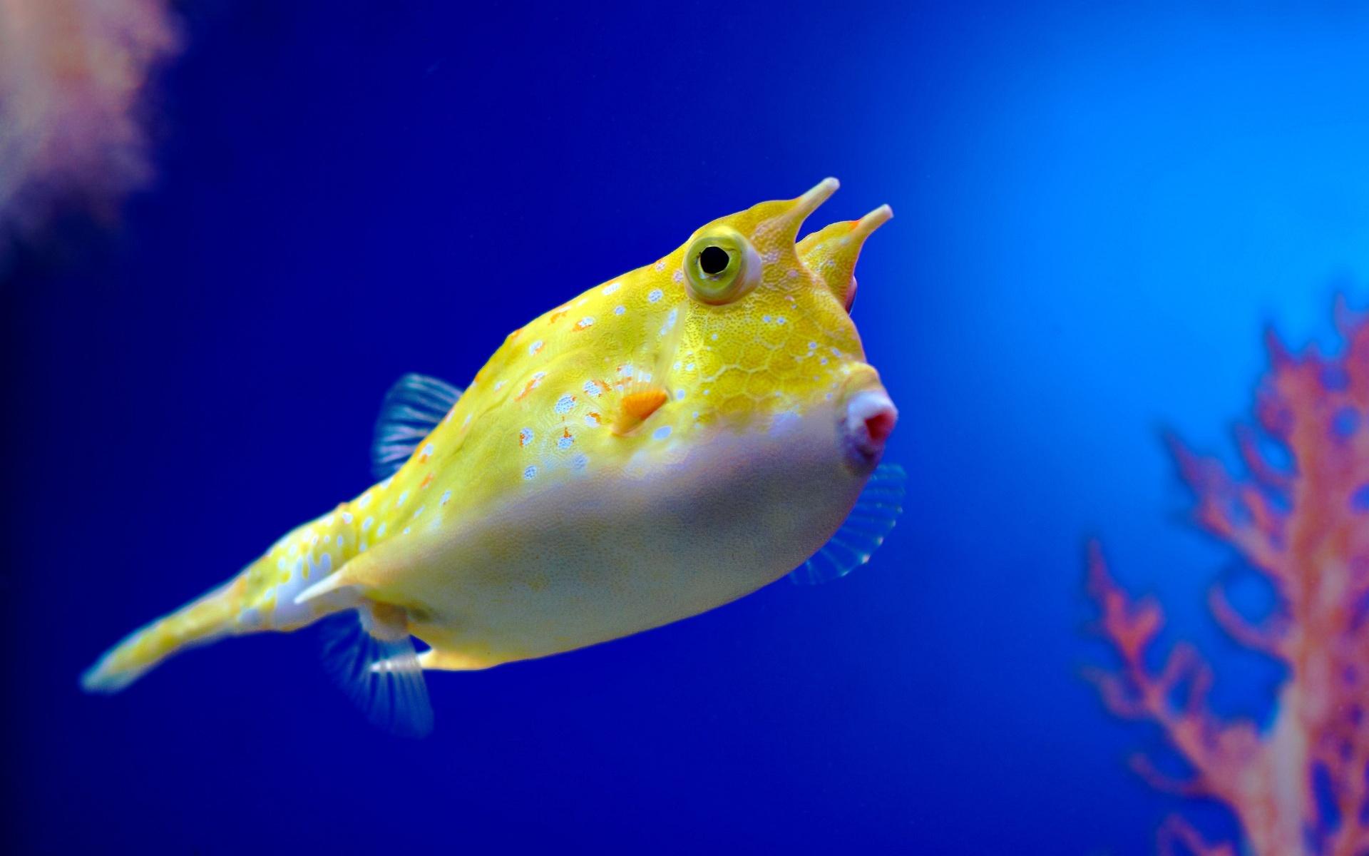 странные рыбы фото и название фильтрации для